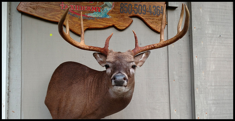 8 Point Mount